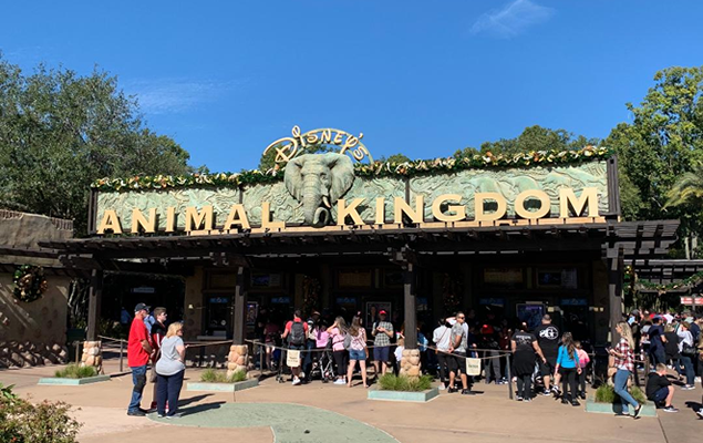 animal-kingdom-small